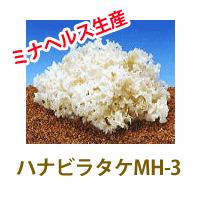 꽃송이 버섯 MH-3