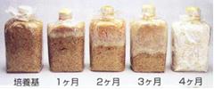 霊芝菌糸体の増殖過程